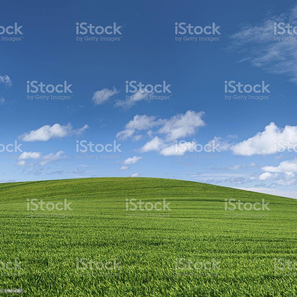 Square spring landscape 58MPix XXXXL - meadow, blue sky royalty-free stock photo