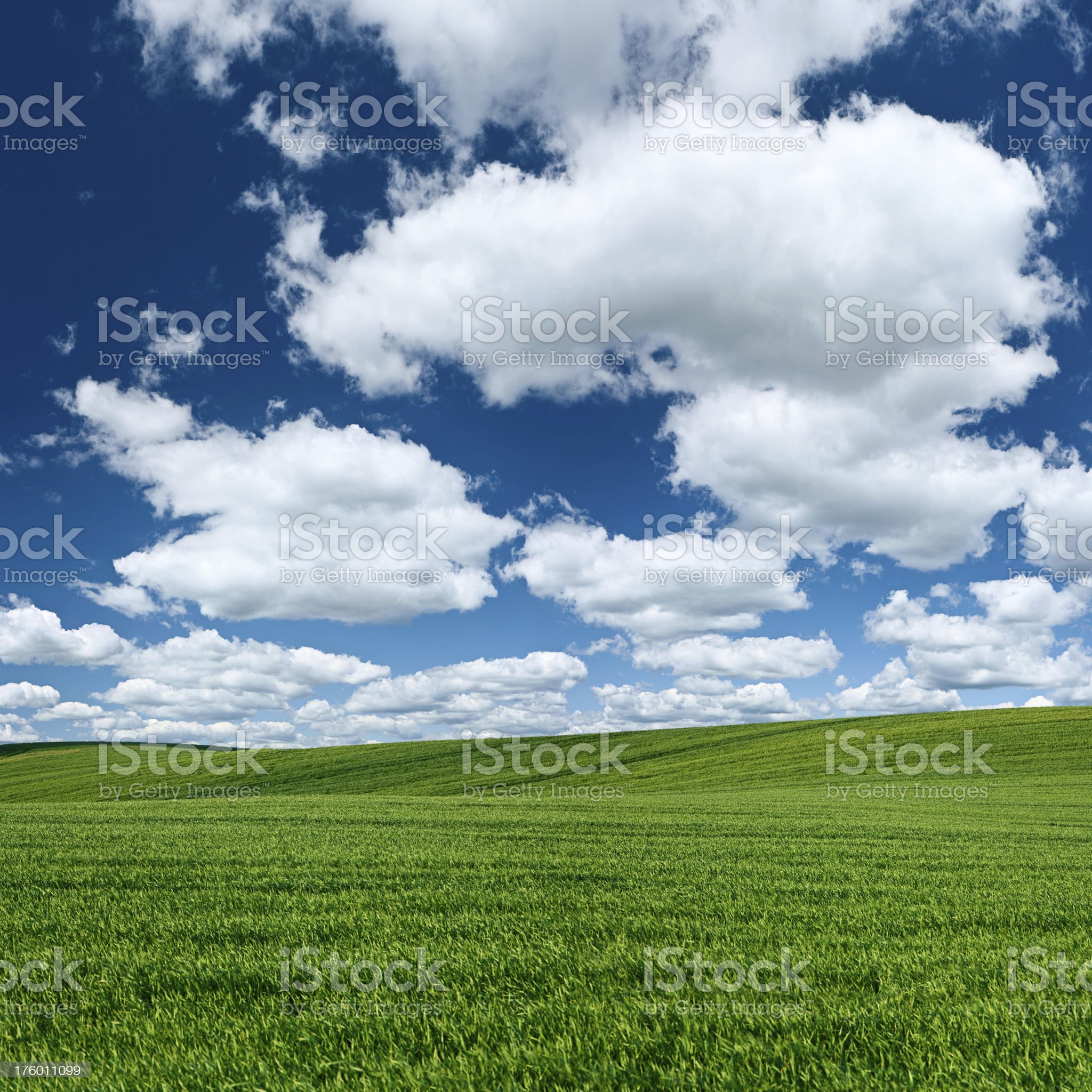 Square spring landscape 75MPix XXXXL - meadow, blue sky royalty-free stock photo