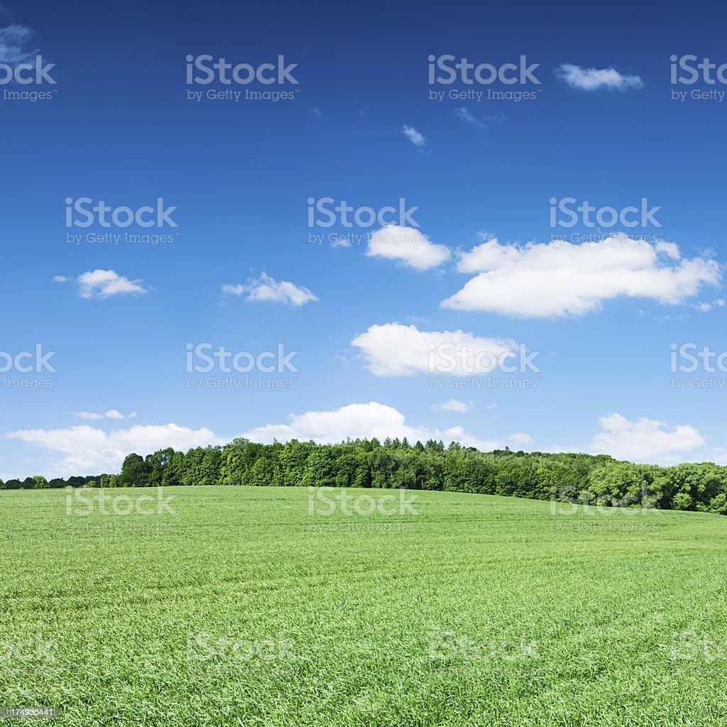 Square spring landscape XXXXL 33MPix - meadow, blue sky royalty-free stock photo