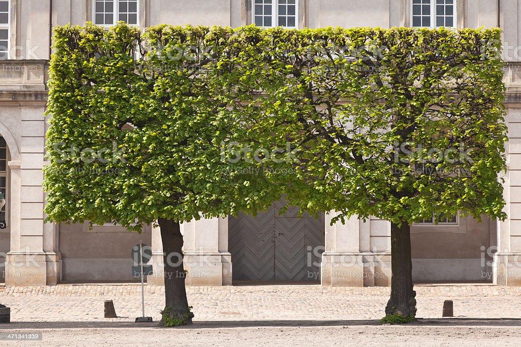 Square Tree royalty-free stock photo