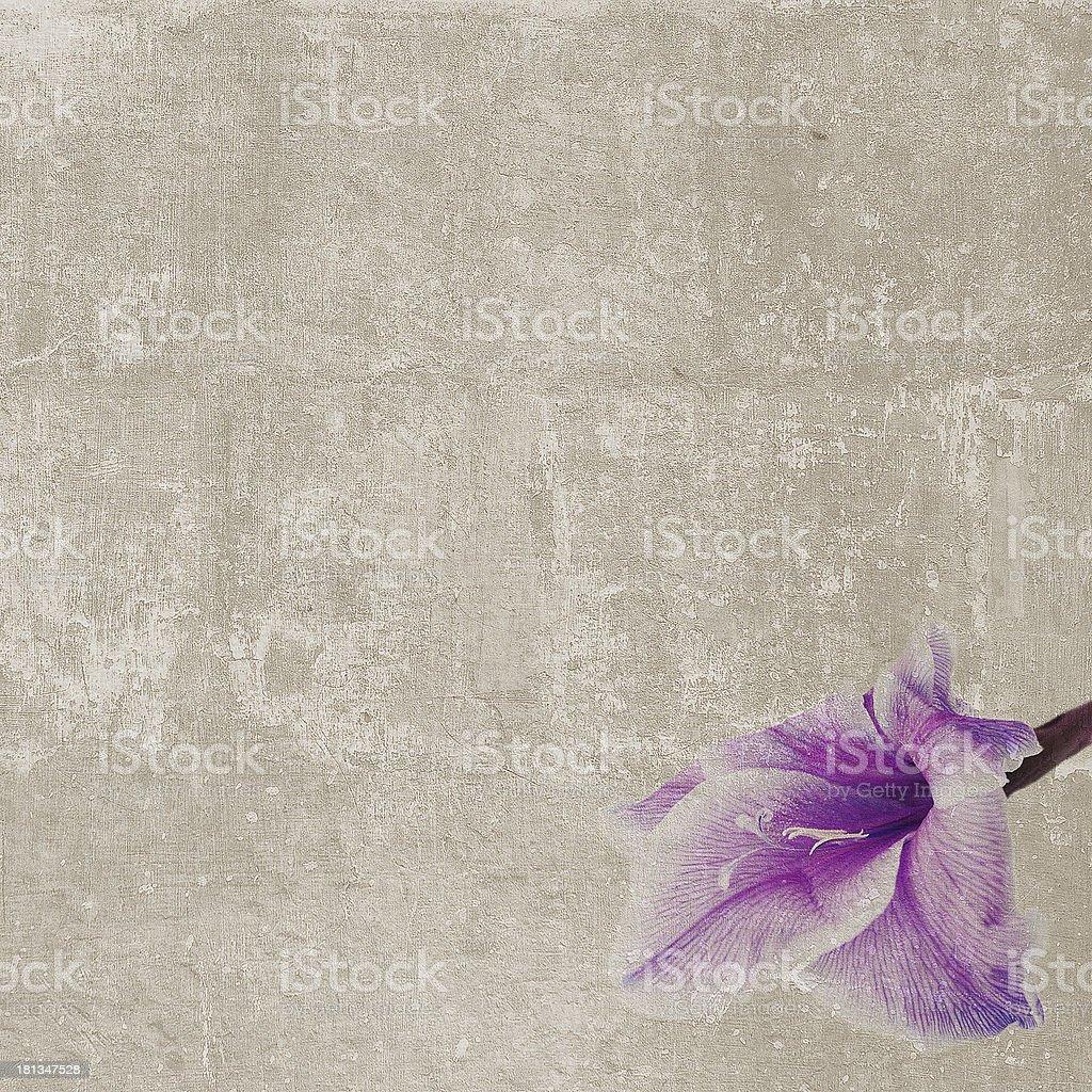 Square vintage texture single gladiole stock photo
