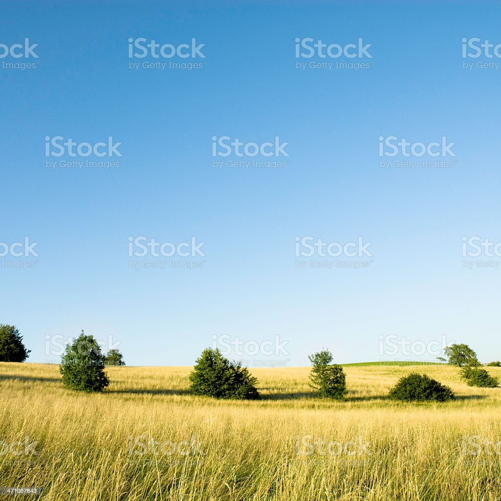 Squared Summer Landscape royalty-free stock photo