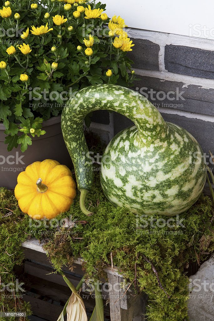 Squash and little pumpkin royalty-free stock photo