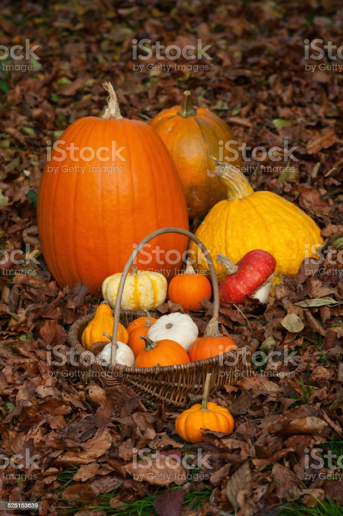 Squash and Pumpkins in basket surrounded by leaves stock photo