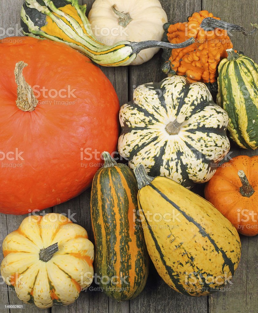 Squash and Pumpkins royalty-free stock photo