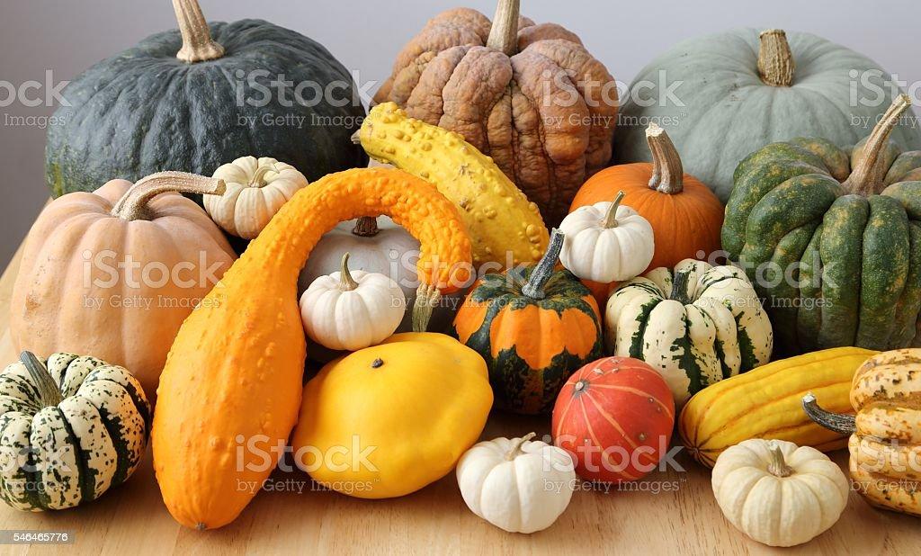 Squash and pumpkins. stock photo