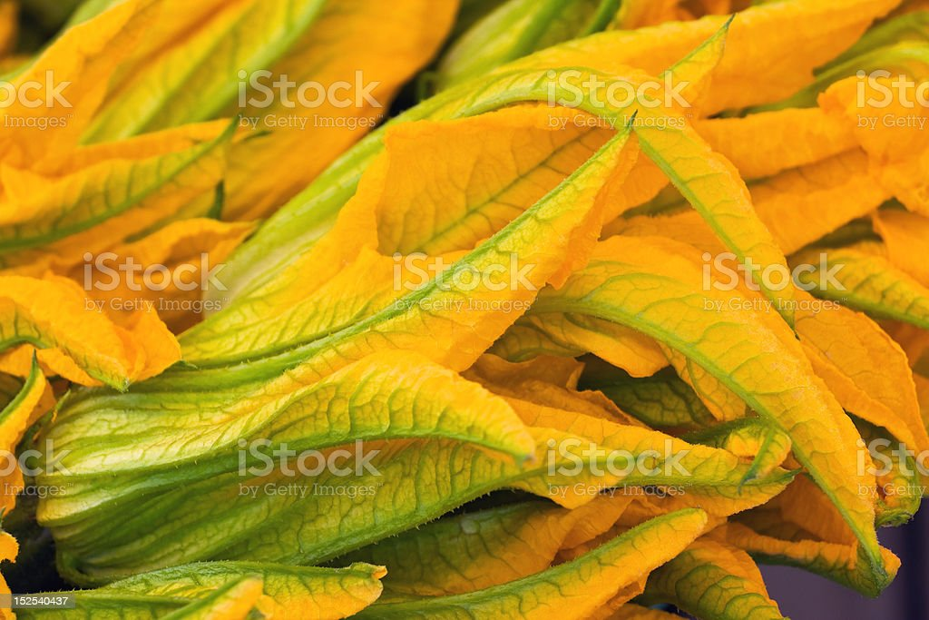 Squash Blossoms royalty-free stock photo