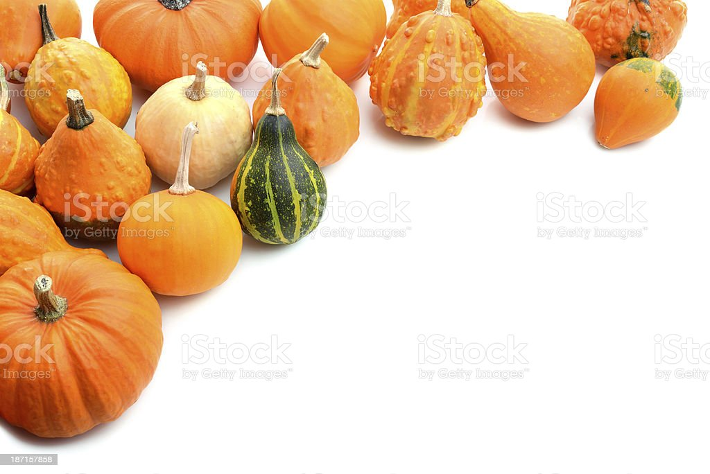 Squash family with copy soace stock photo
