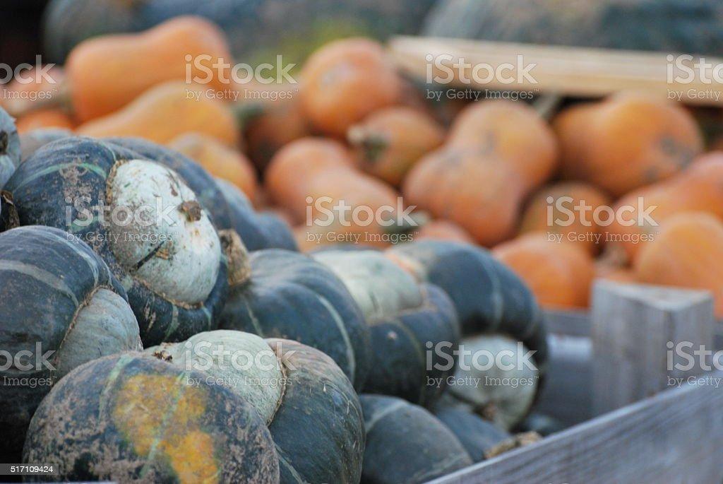 squash stock photo