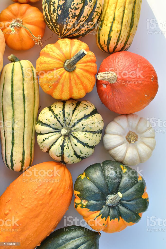 Squash vegetable collection stock photo
