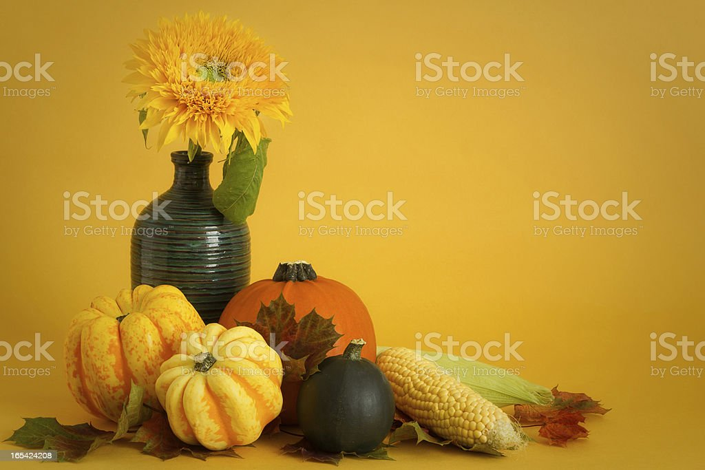 Squashes and sunflower royalty-free stock photo