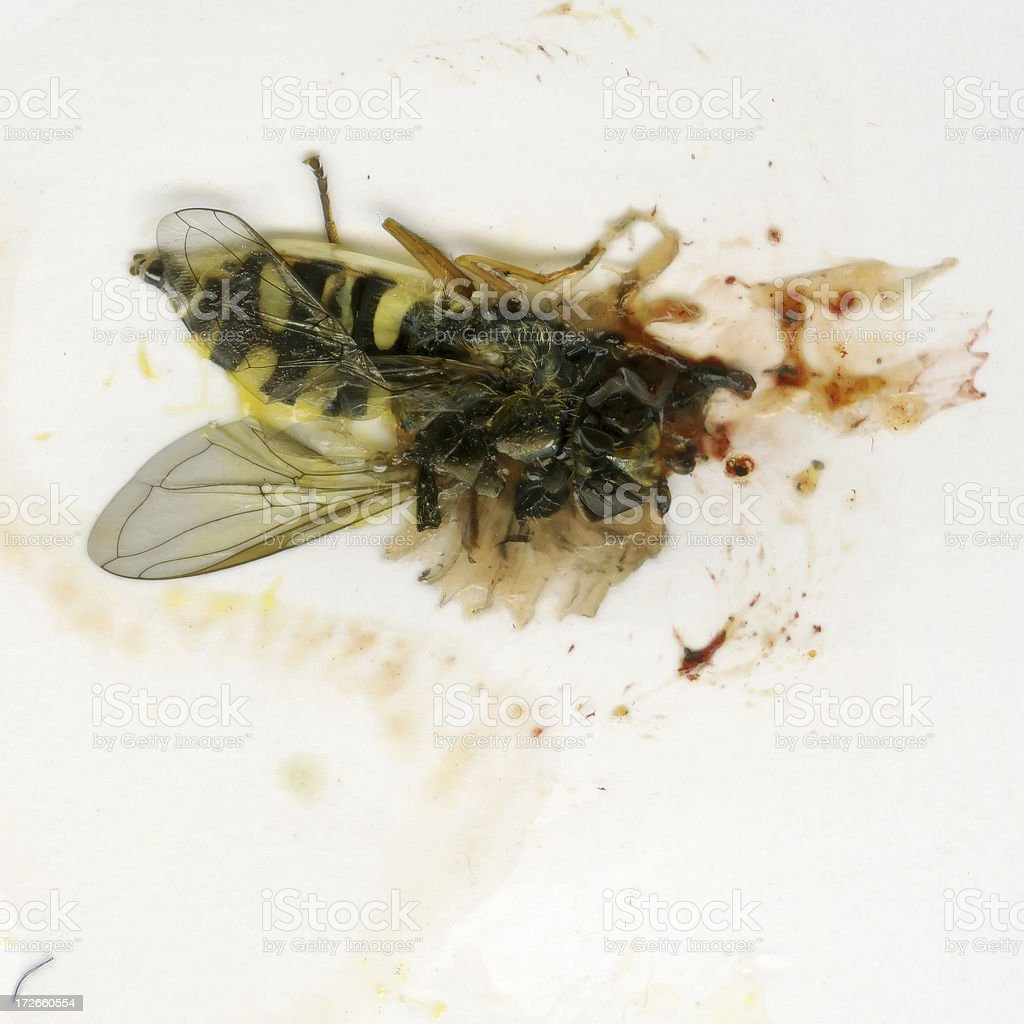 Squeezed Wasp royalty-free stock photo