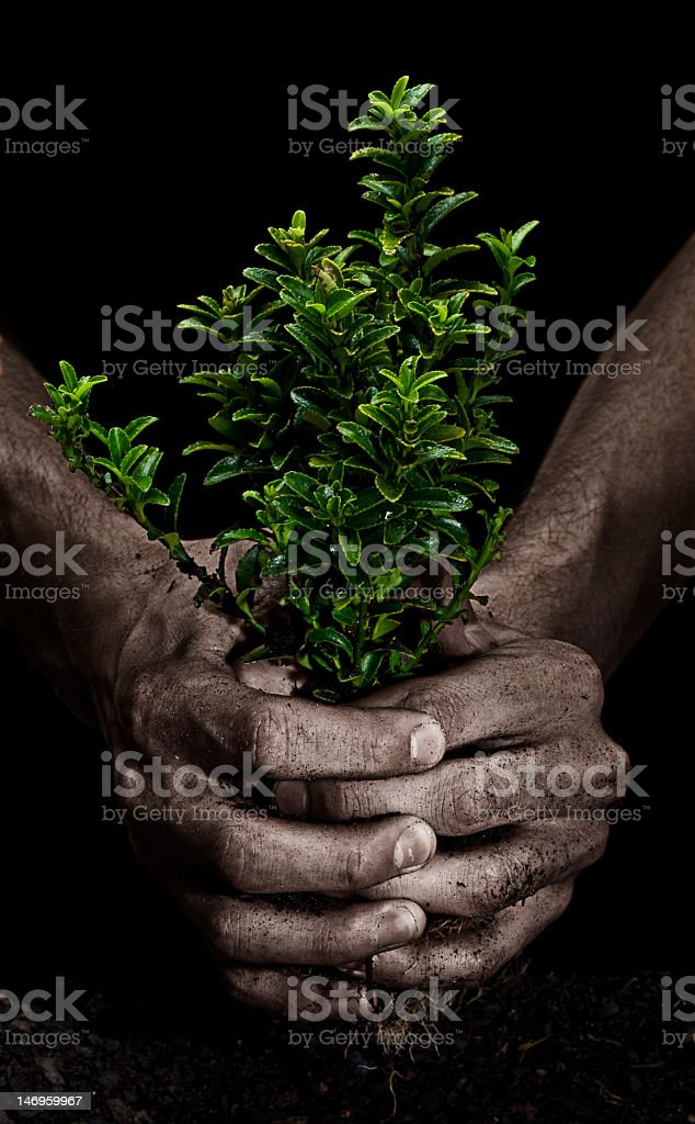 Squeezing a Tree royalty-free stock photo