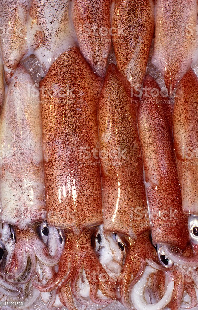 Squid Octopus royalty-free stock photo
