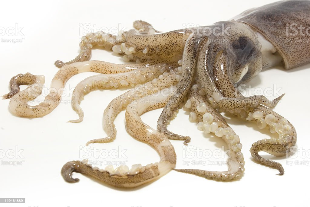 squid royalty-free stock photo