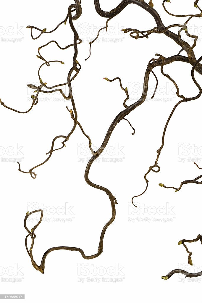 Squiggled branch royalty-free stock photo