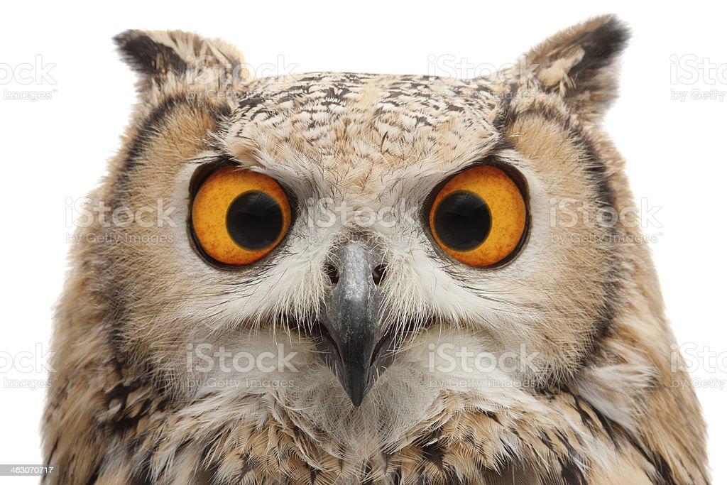 Squinting Owl stock photo