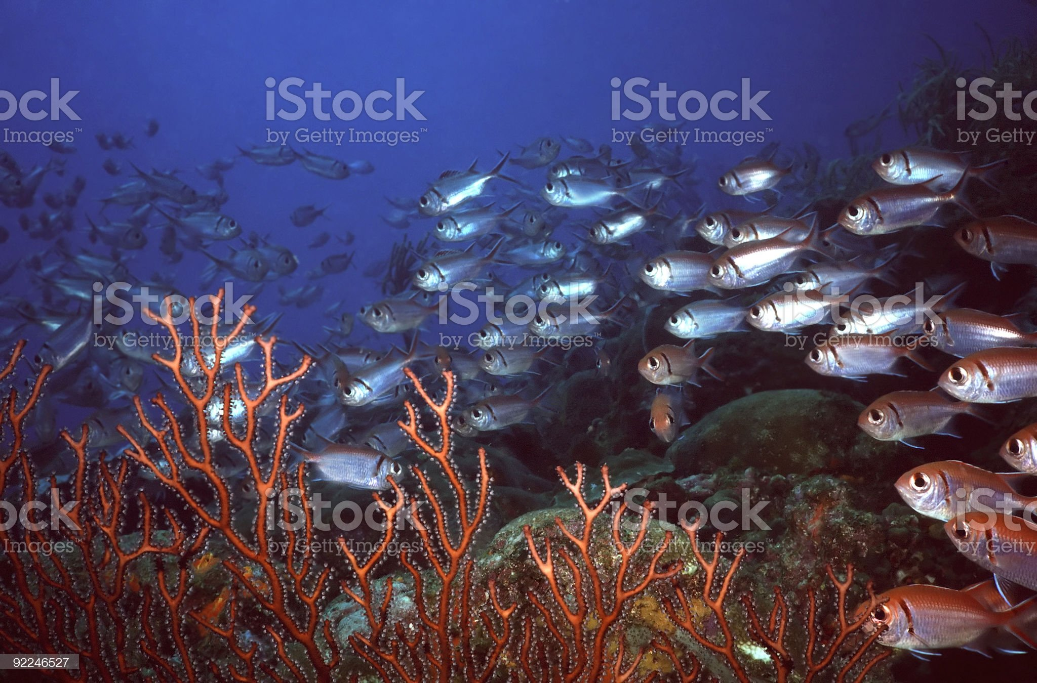 Squirell Reef royalty-free stock photo