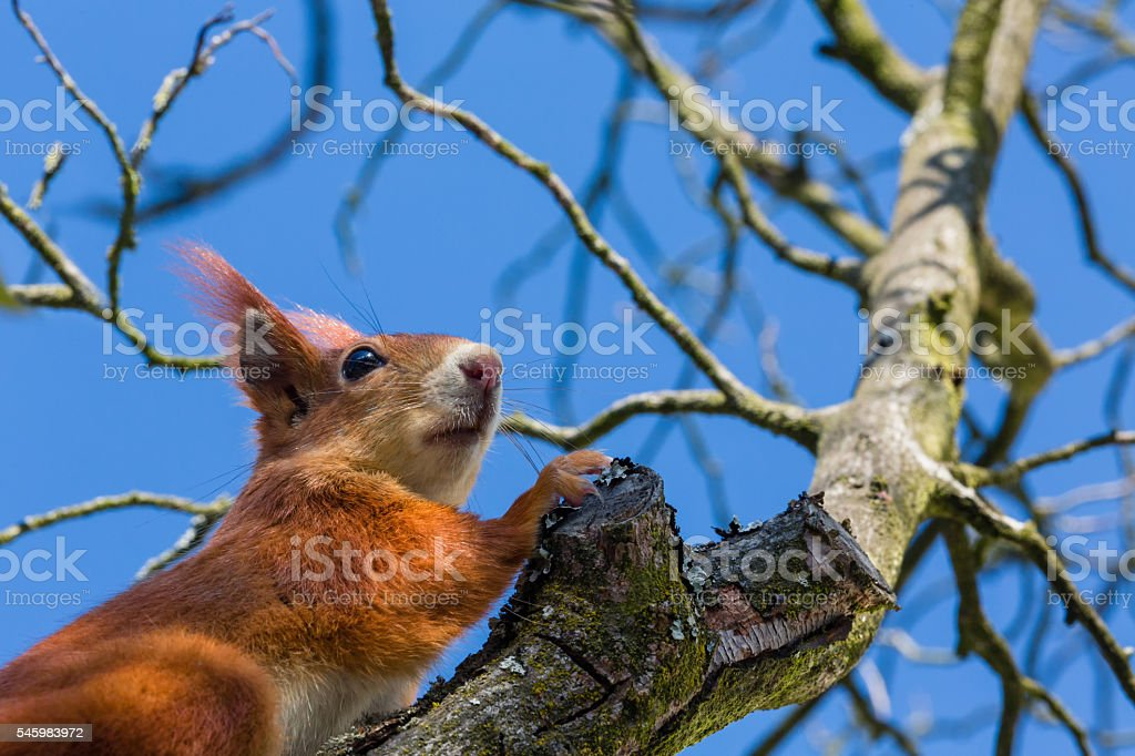 squirrel and blue sky stock photo