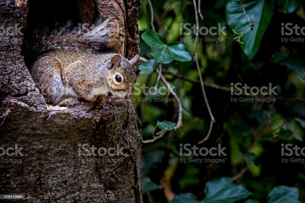 Squirrel at Golden Gate Park, San Francisco stock photo