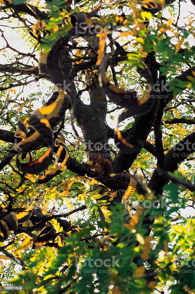 Squirrel in forest on the branch of tree stock photo