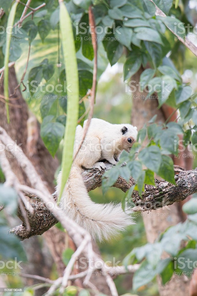 squirrel in nature stock photo