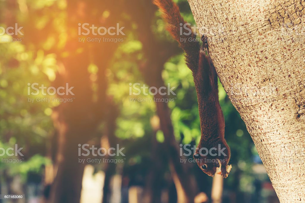 Squirrel in the park stock photo
