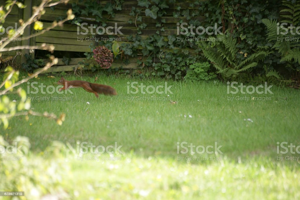 Squirrel jumping away stock photo