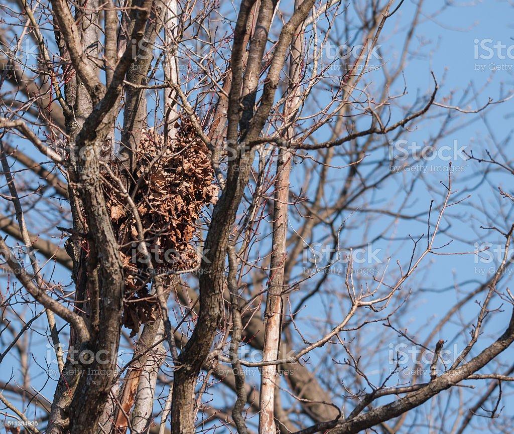 Esquilo Nest foto royalty-free