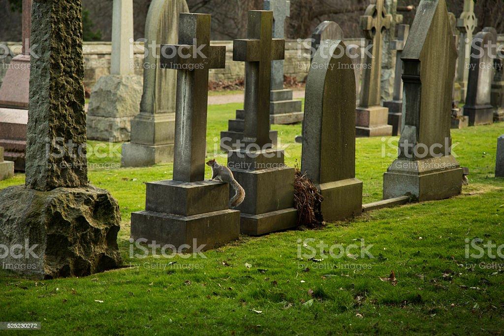 Squirrel on a gravestone, Taken in Scotland stock photo