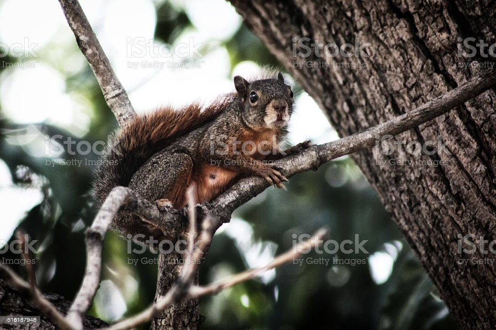 Squirrel on the branch stock photo