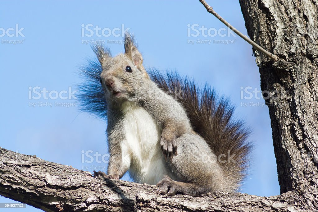 Squirrel on the tree stock photo