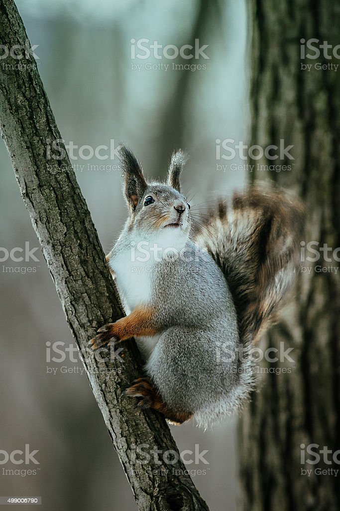 다람쥐 on 트리 royalty-free 스톡 사진