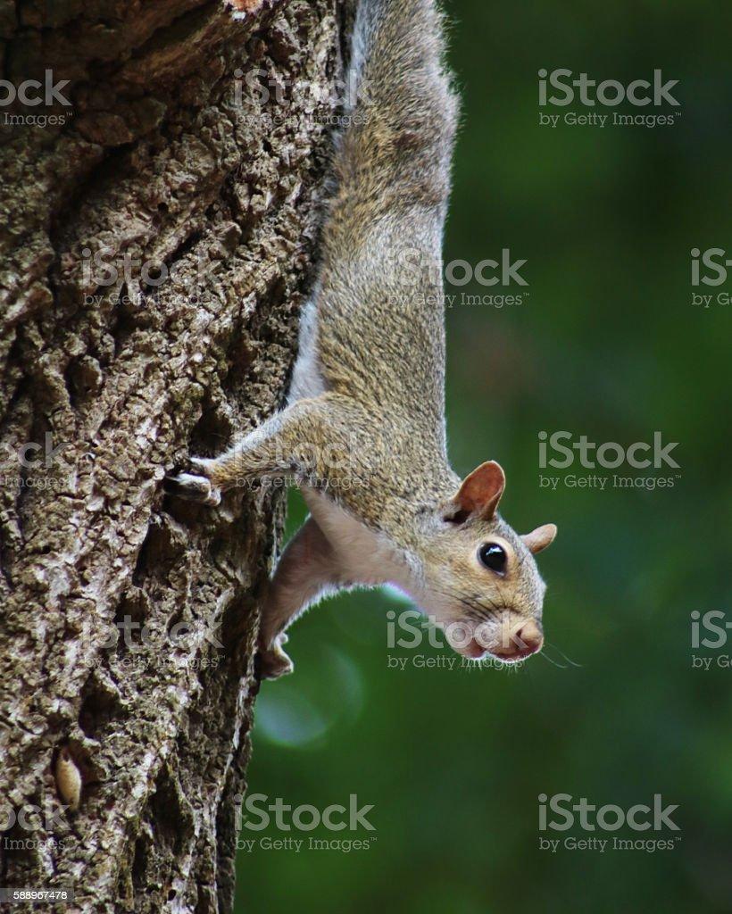 Écureuil sur tree photo libre de droits