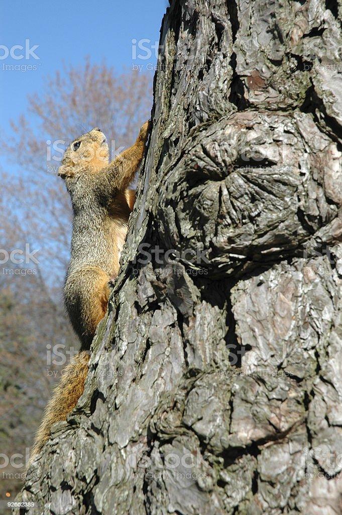 Белка на дерево Стоковые фото Стоковая фотография