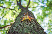 Squirrel on tree with nut