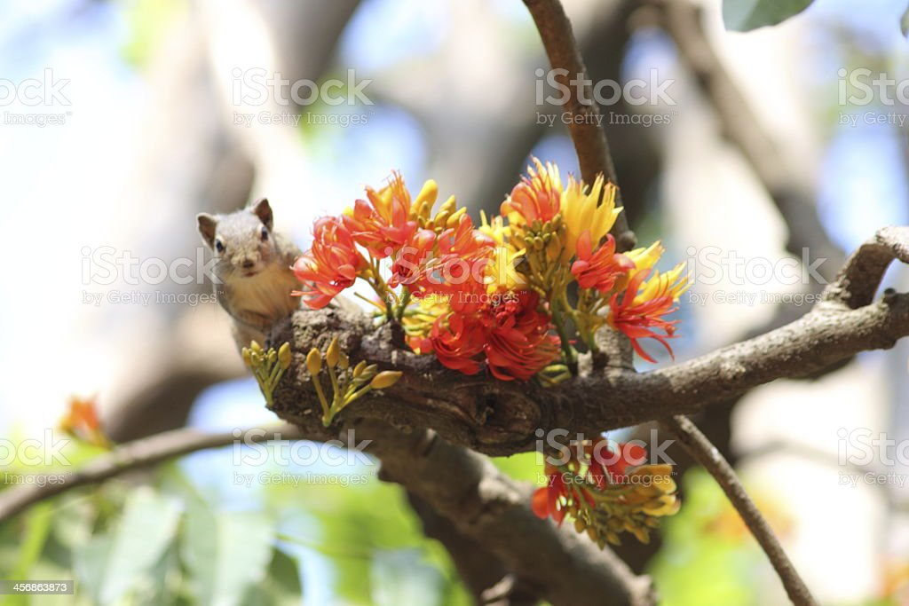 Squirrel posing with Flowers stock photo