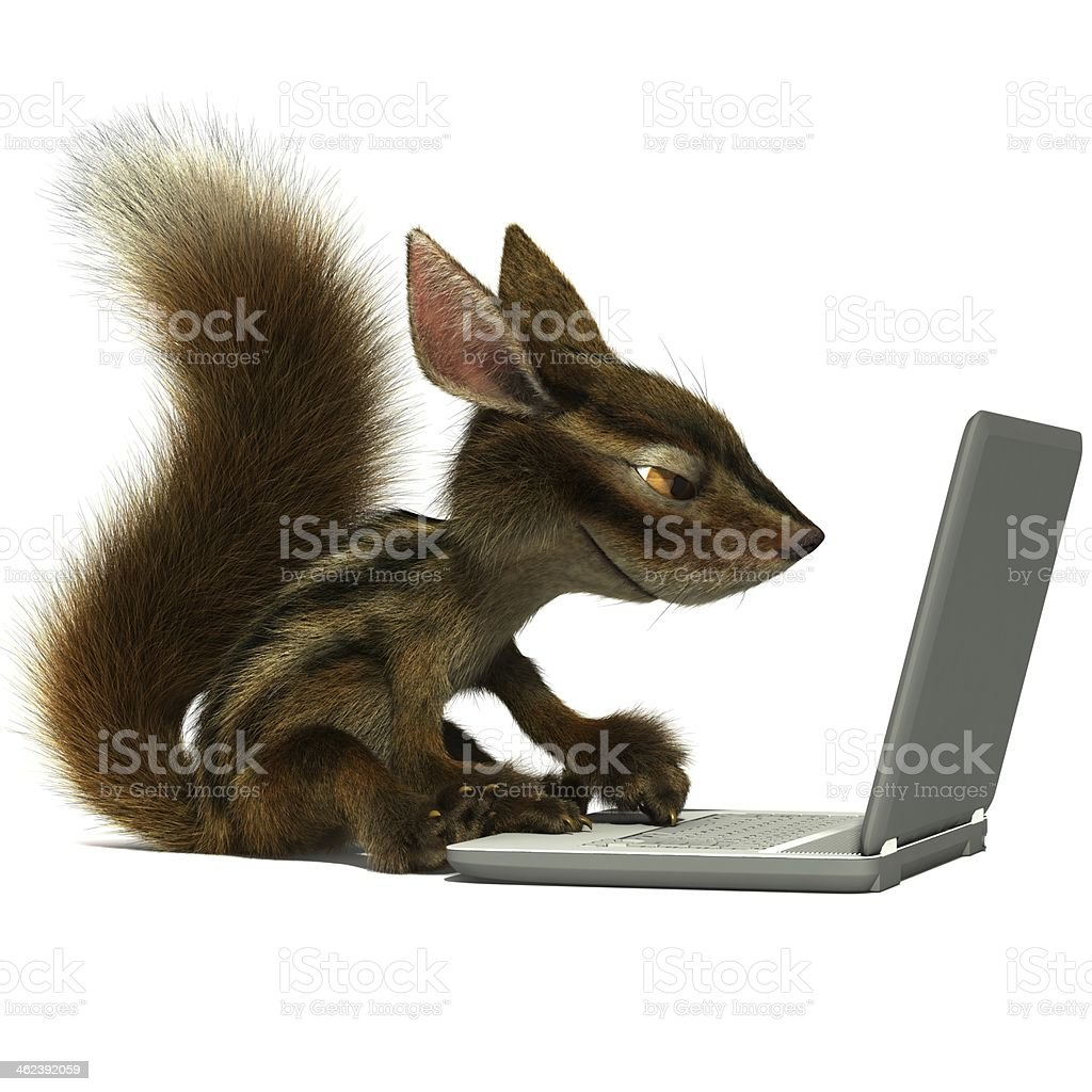 Squirrel using a laptop stock photo