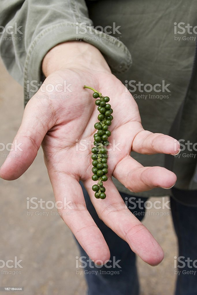 Sri Lanka: Peppercorns stock photo