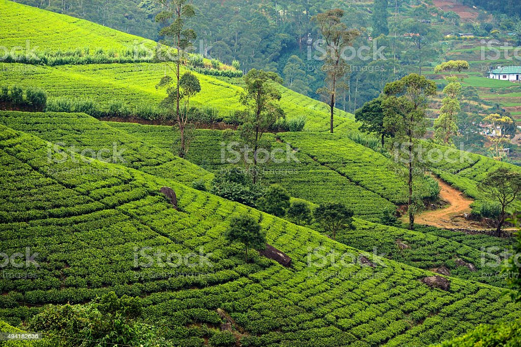 Sri Lanka stock photo