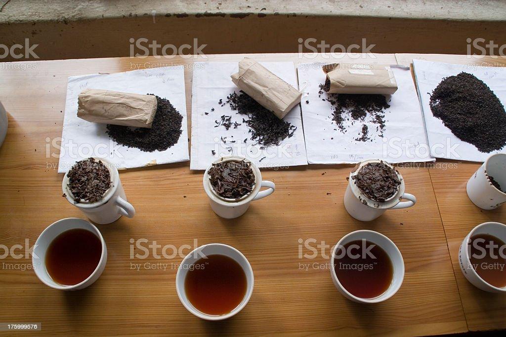 Sri Lanka: Tasting the Teas stock photo