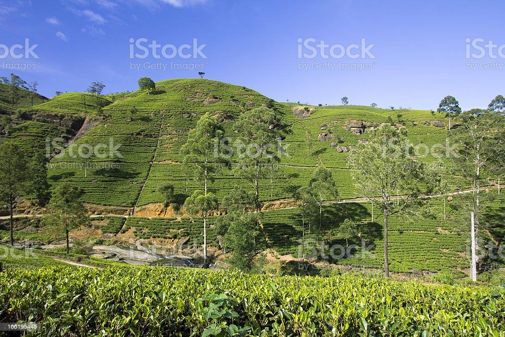 Sri Lanka tea garden mountains royalty-free stock photo