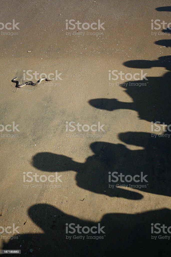 Sri Lankans look at sea snake royalty-free stock photo