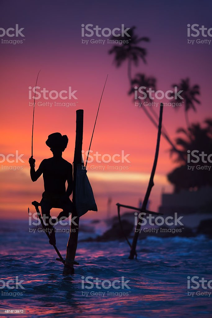 Sri Lanka's Stilt Fisherman. stock photo