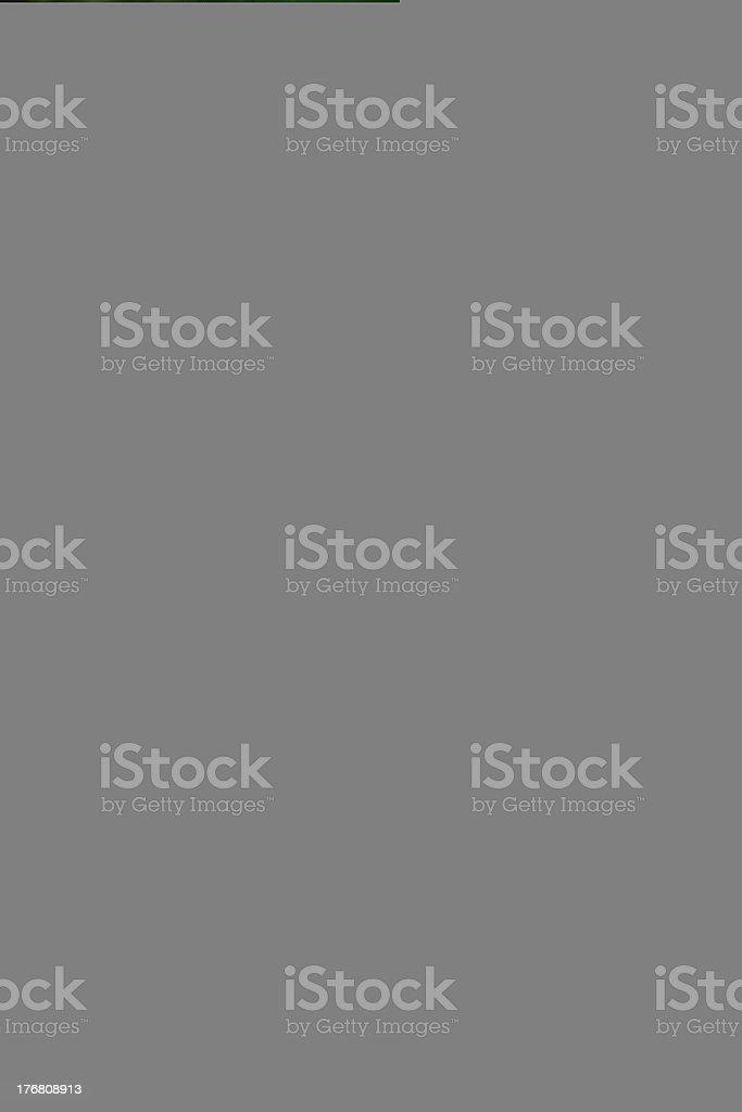 St bernard face royalty-free stock photo