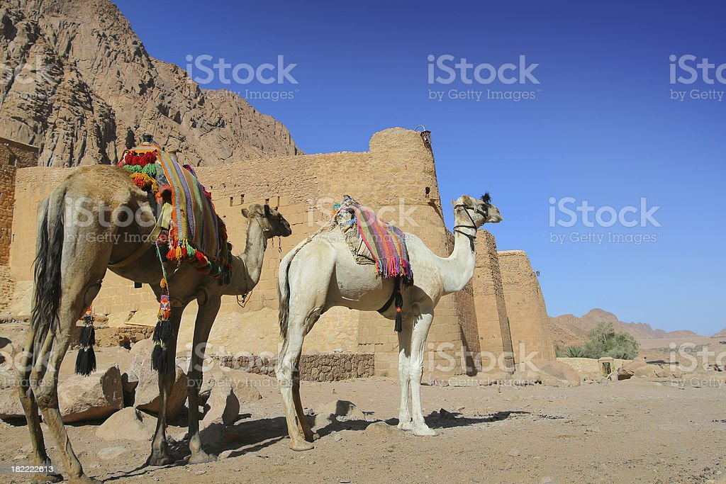 St. Catherine monastery stock photo