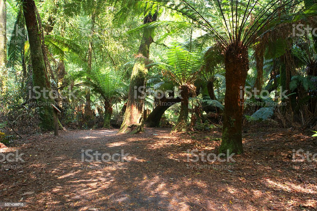 St Columba Falls Reserve PYENGANA temperate rainforest tasmania stock photo