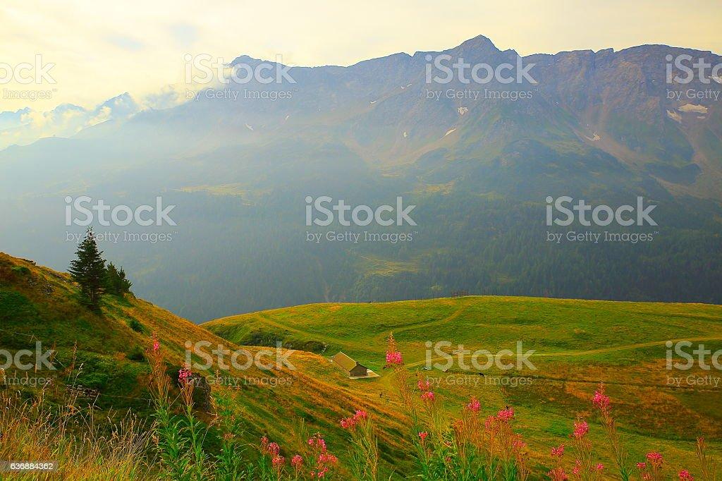 St Gotthard Pass alpine landscape, pea wildflowers, Ticino, Swiss Alps stock photo