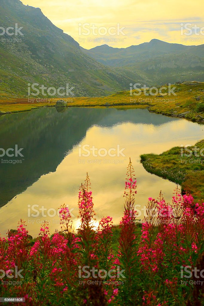 St Gotthard Pass lake, pea wildflowers, Airolo, Ticino, Swiss Alps stock photo
