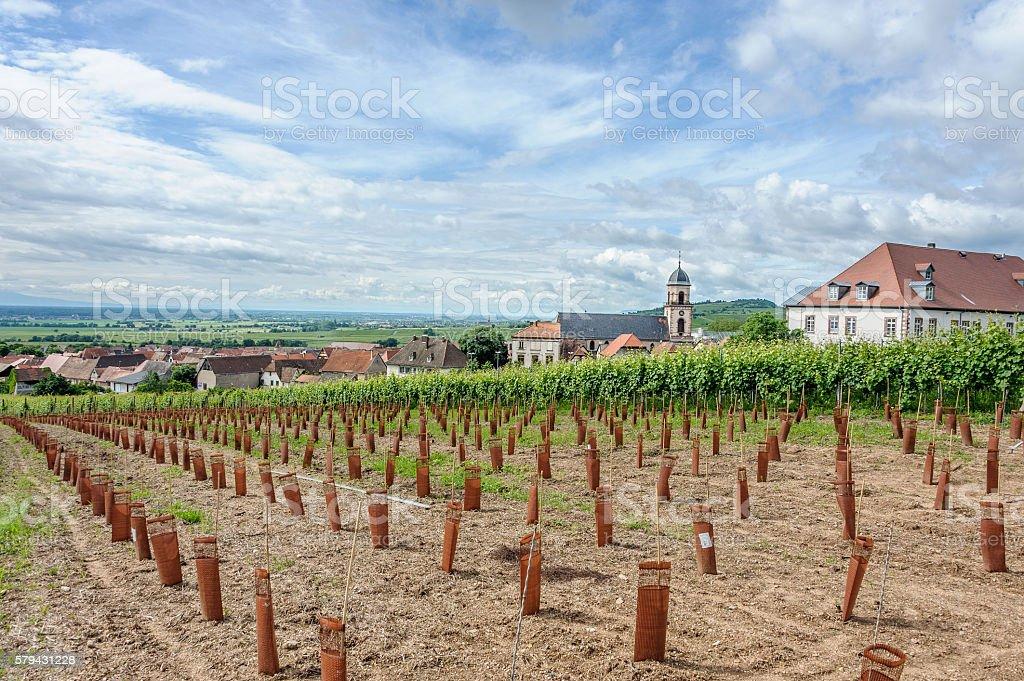 St. Hippolyte with newly plantede vineyard stock photo